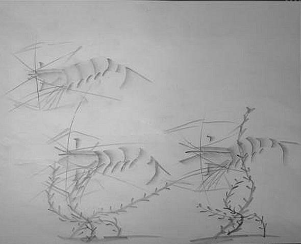 """作品中国铅笔画""""虾"""""""