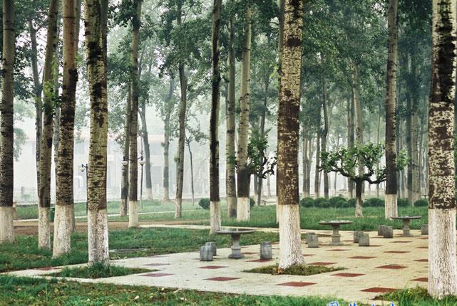 洪家楼校区小树林